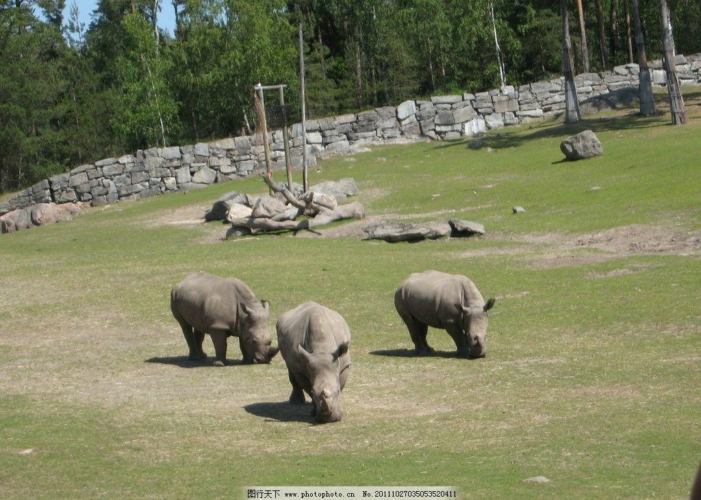 瑞典动物园犀牛 瑞典动物园 犀牛 野生动物 生物世界 摄影 180dpi jpg