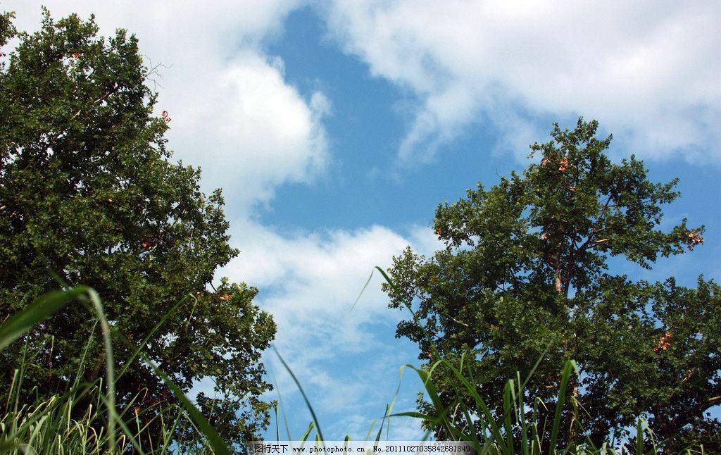 蓝天图片_树木树叶_生物世界_图行天下图库