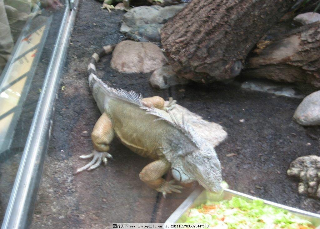 瑞典动物园爬行馆 瑞典动物园 爬行馆 鳄鱼 玻璃温室 喂食 其他生物