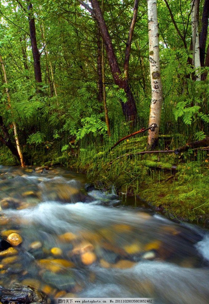 树林 树木 小溪 树叶 自然 绿树 绿色自然 大自然 自然风 树木树叶 生