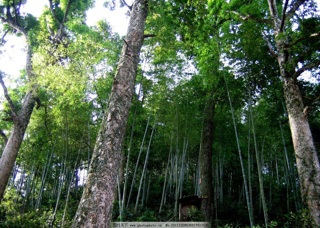 森林树木名图片大全