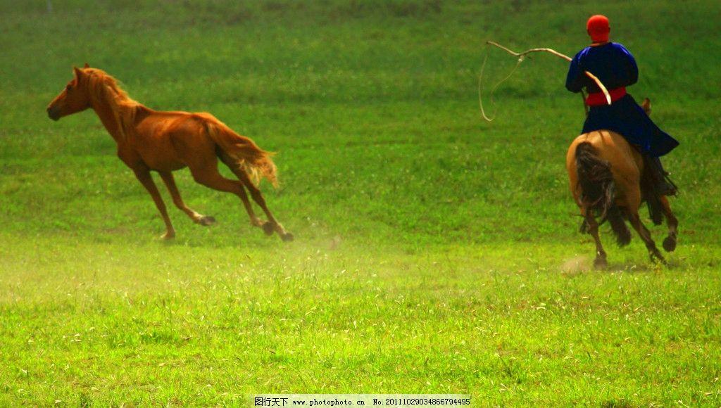 壁纸 草原 动物 马 骑马 桌面 1024_580