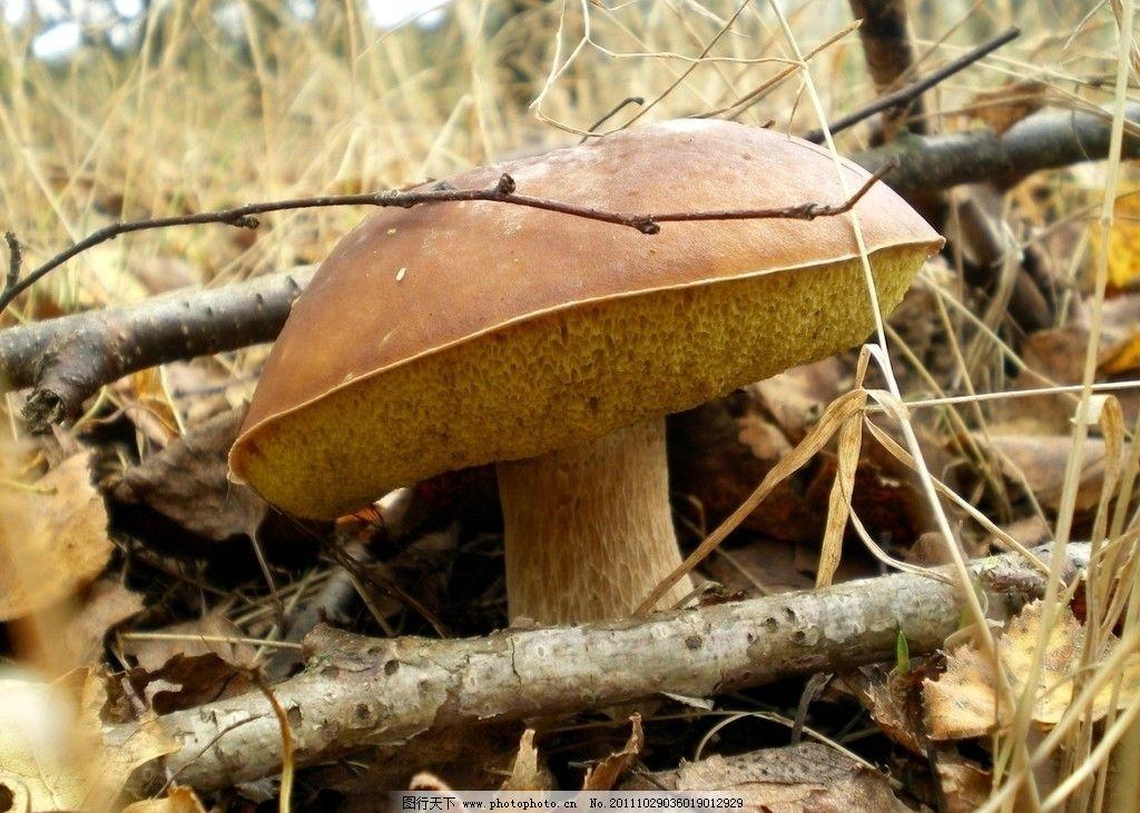 蘑菇 小蘑菇 野蘑菇 野生蘑菇 其他生物 生物世界 摄影 300dpi jpg