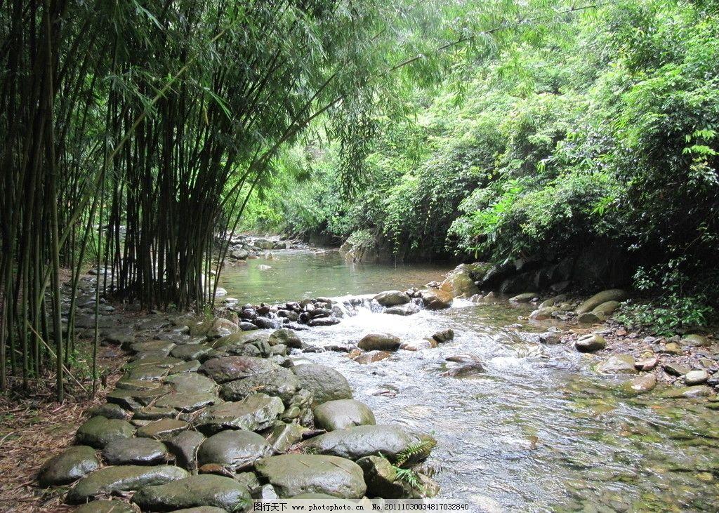 山溪 山水 竹林 小溪 紫云谷 肇庆 小河 自然风景 自然景观