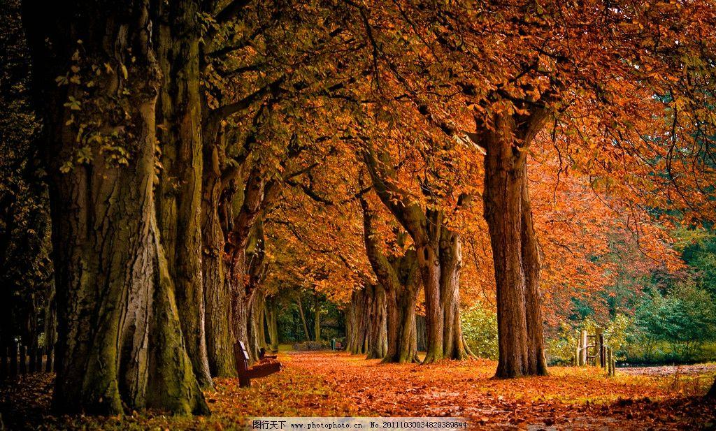 树林 秋天 秋季 落叶 树叶 枫叶 枯叶 红叶 植物 秋色 树木树叶 风景