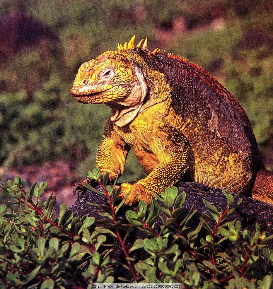 蜥蜴 动物 稀有动物 野生动物