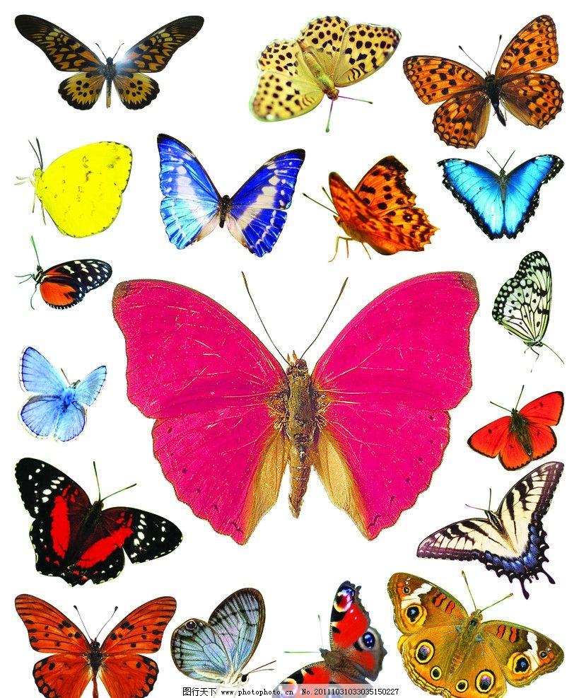 蝴蝶 动物 昆虫 美丽 鲜艳 小花 飞蛾 飞舞 毛毛虫 蜕变 触须 飞翔