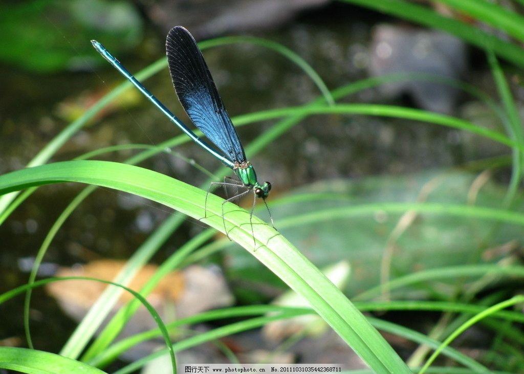 慈姑和蜻蜓的步骤画法