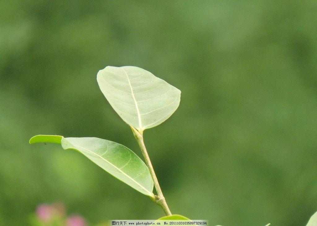 叶子 树叶图片