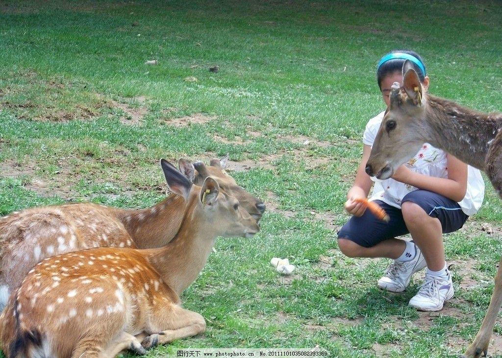 喂梅花鹿 动物园 梅花鹿 野生动物 生物世界 摄影 480dpi jpg
