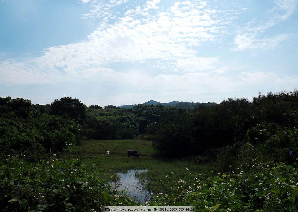 自然风景 树林 蓝天 白云 草地 山水 美景 自然风光 水牛 野花 小黄花