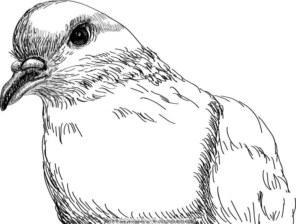 鸟 素描 手绘 矢量图片
