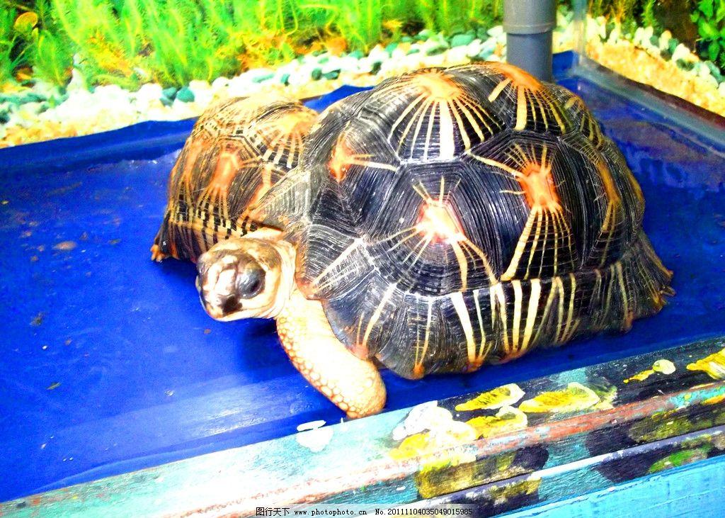 宁波海洋世界乌龟图片图片