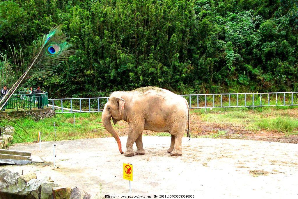 宁波雅戈尔动物园 大象
