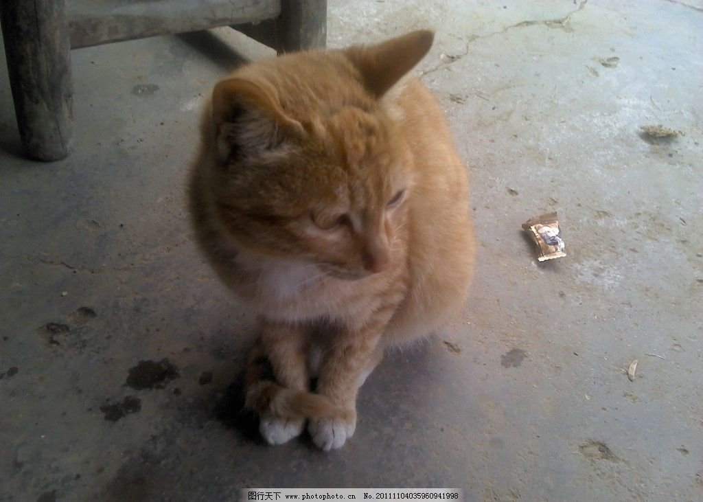 可爱的猫图片