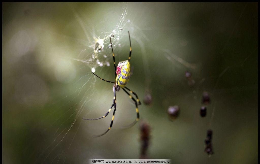 蜘蛛的家 蜘蛛 蜘蛛网 可爱 吐丝 蜘蛛侠 壁纸 背景 白线 昆虫 天打雷