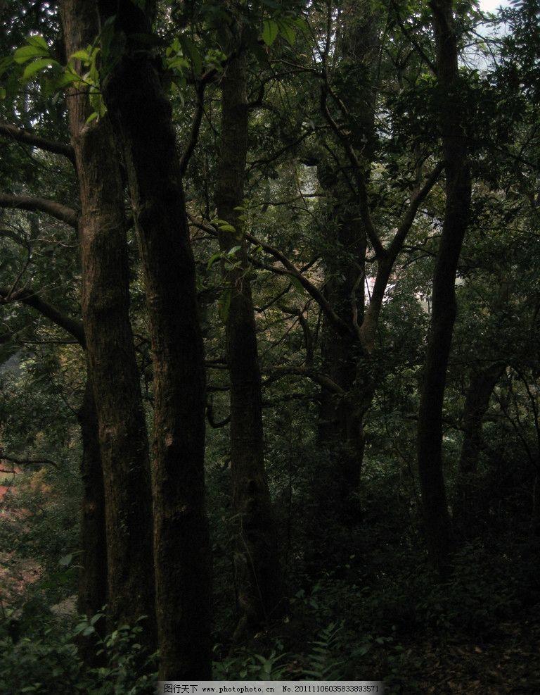 雨林 浙江武义 郭洞 雨天 树林 树木树叶 生物世界 摄影 180dpi jpg