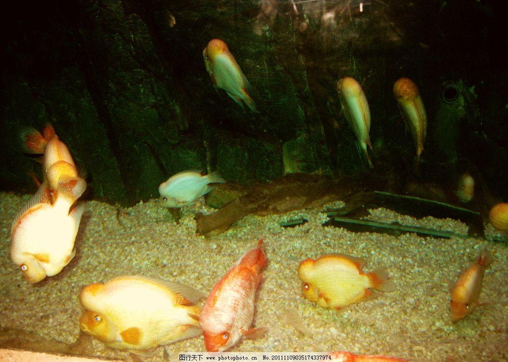 蓬莱海底世界的鱼 海底风景 绿色红色鱼 黄色红色鱼 珍贵动物 海洋