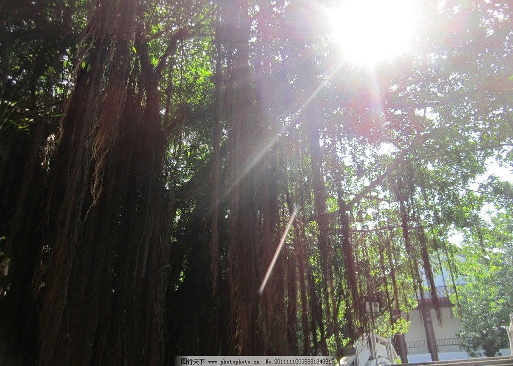 一米阳光 阳光 大树 绿色 绿树 树木树叶 生物世界 摄影 180dpi jpg