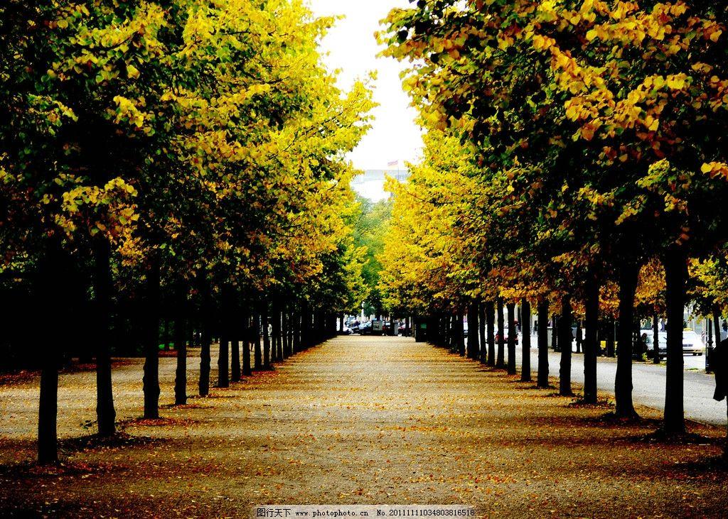 秋韵 秋季 秋季景色 秋天景色 落叶树木 落叶 枯叶 美丽风光 风景图片