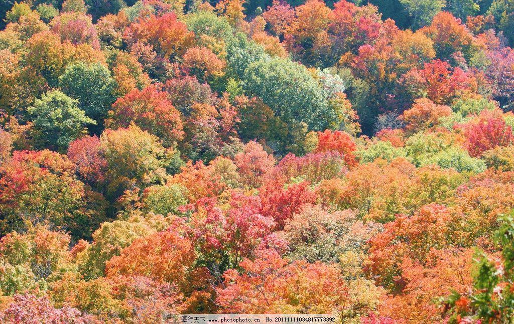 落叶树木 秋天树木 树木 美丽风光 风景图片 美丽风景 风光图片 秋季