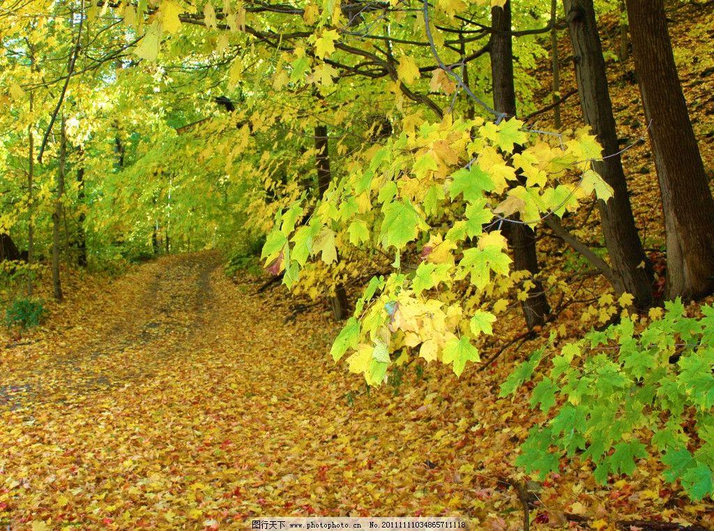 秋季落叶 风光摄影图片 美丽景色 秋天 深秋 秋韵 秋季景色 秋天景色图片