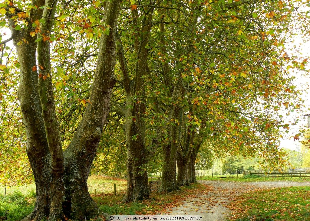秋天树木图片