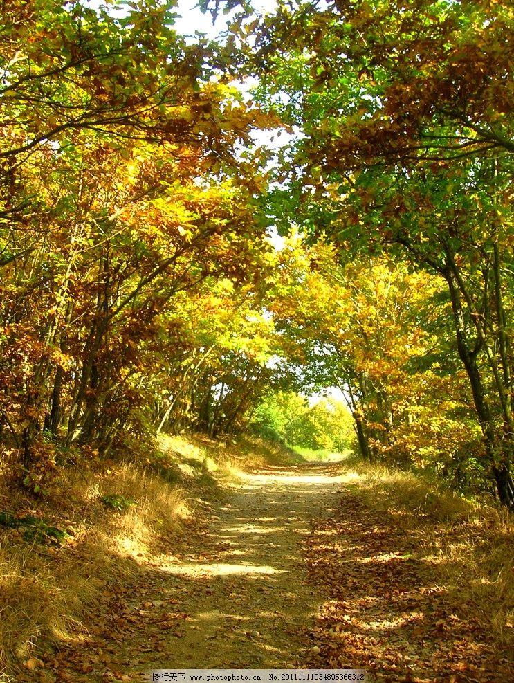 竖屏秋天风景壁纸