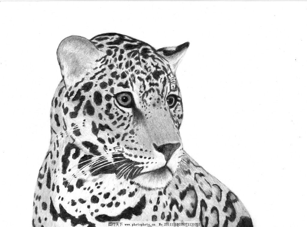 猎豹灰度图 猎豹 灰度图 猛兽 斑点 猎食 野生动物 生物世界 摄影 600