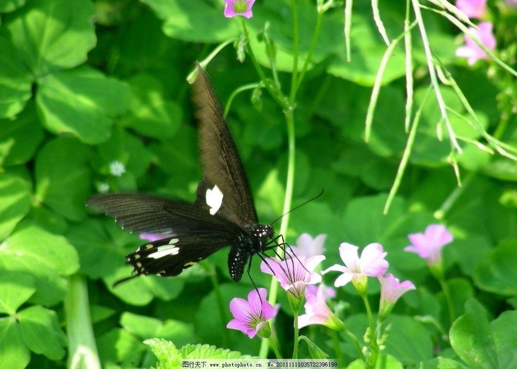 蝴蝶戏花图片