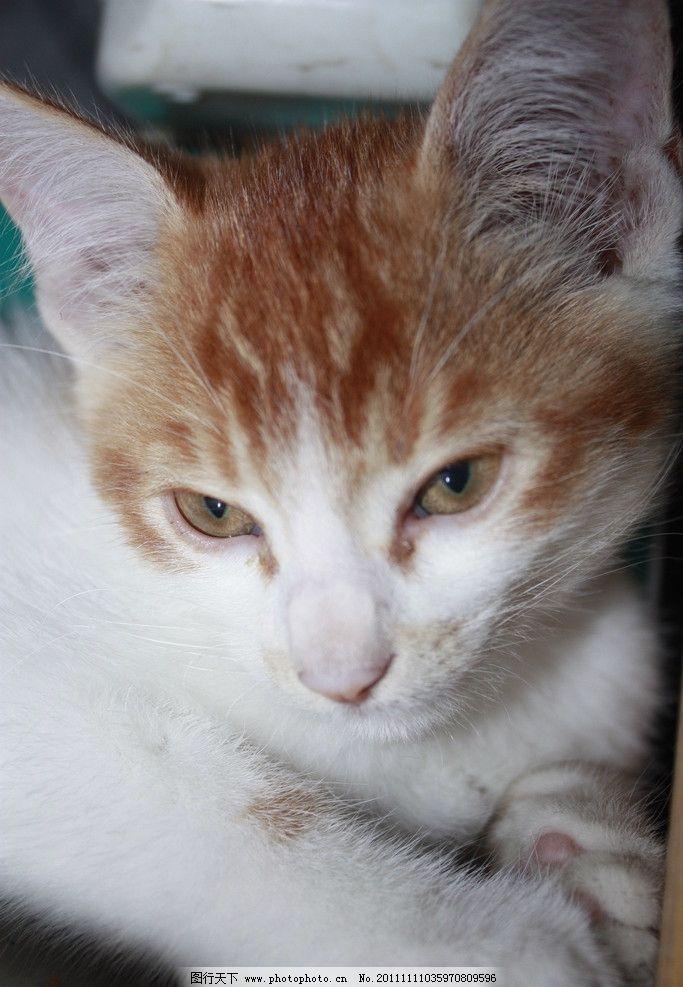 猫咪 动物 宠物 摄影 家禽 生物世界 家禽家畜 72dpi jpg