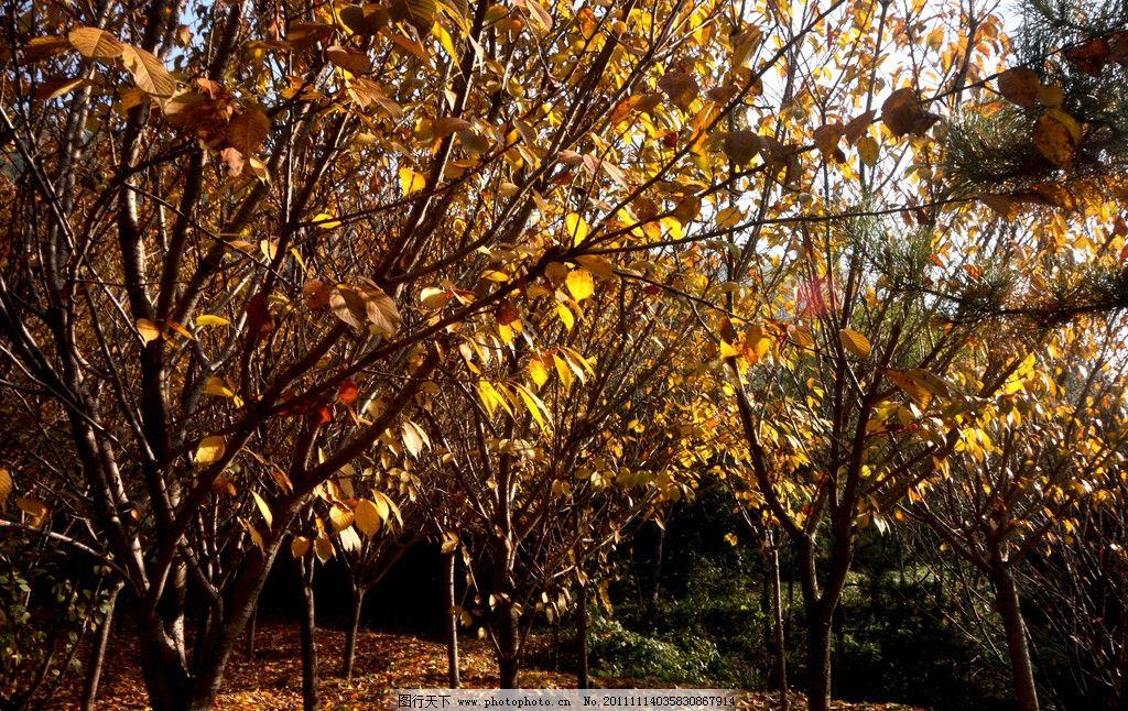 落叶 树林 秋天 树木 树叶 树叶背景 树木树叶 生物世界 摄影 72dpi