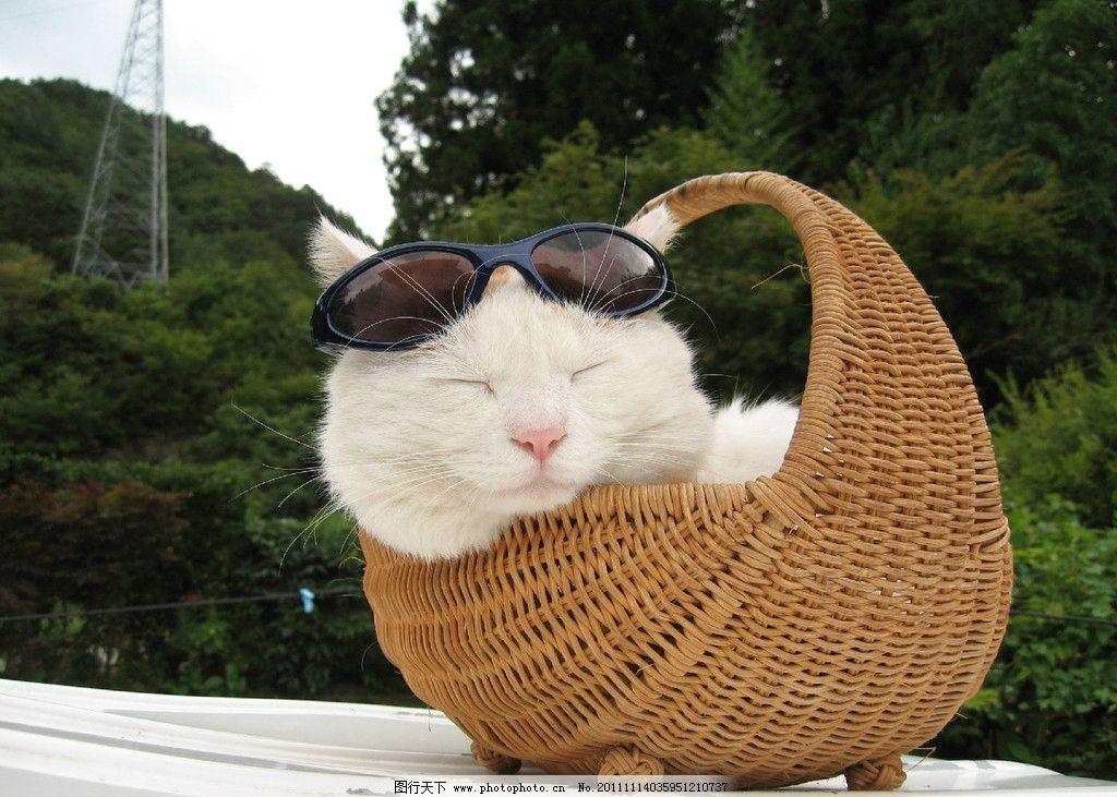 猫咪 动物 可爱猫咪 眼镜 小猫 家禽家畜 生物世界 摄影 72dpi jpg