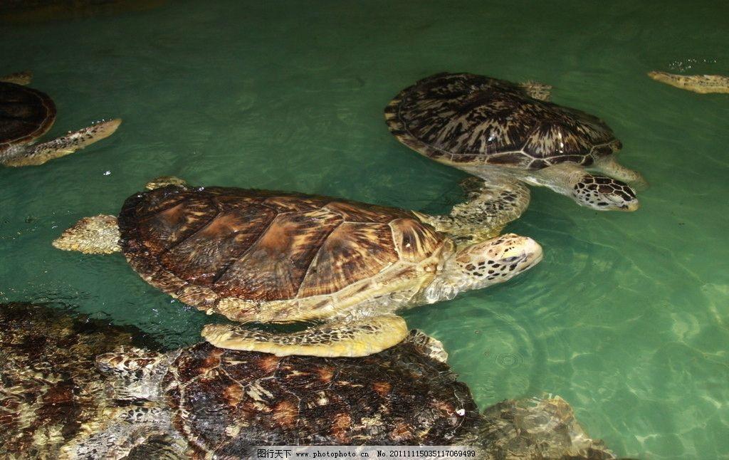 海龟 海洋 爬行动物 摄影