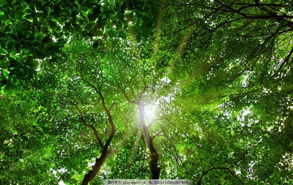 树木摄影 森林 太阳 天空 高清大图 仰望 角度 绿色 健康 环保