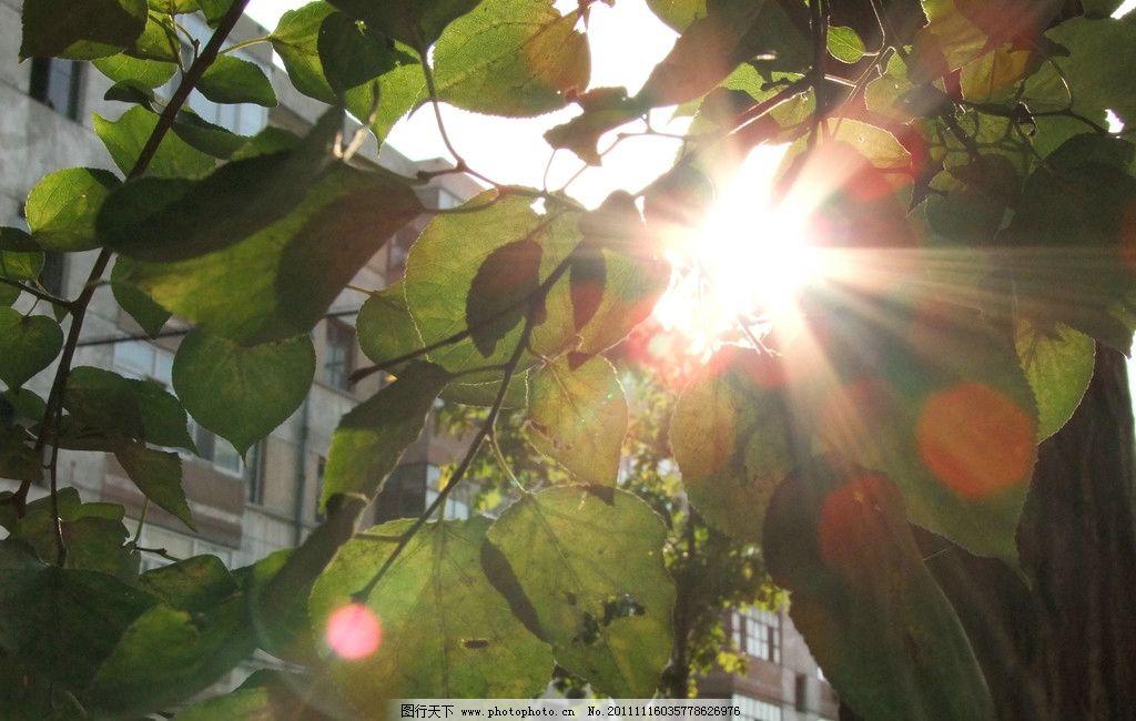 叶子上的阳光图片