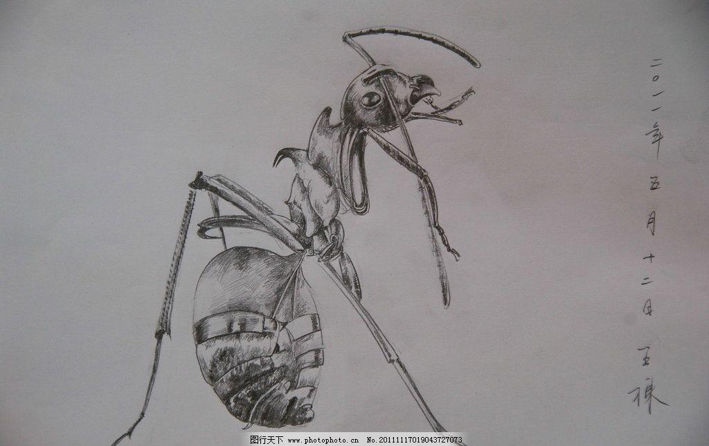 蚂蚁 王栋 昆虫 速写 素描 美术 艺术 王栋油画 绘画书法 文化艺术