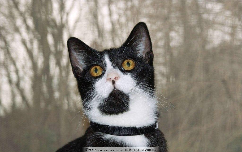 小花猫 小猫 猫猫 小动物 摄影