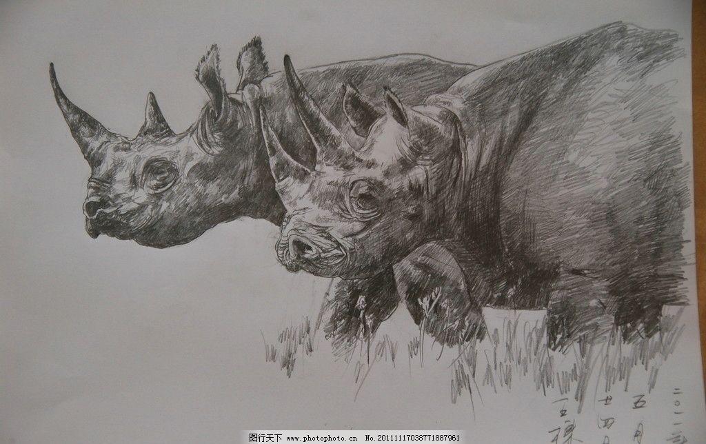 犀牛 王栋 速写 素描 美术 艺术 绘画 动物 美术绘画 文化艺术 摄影