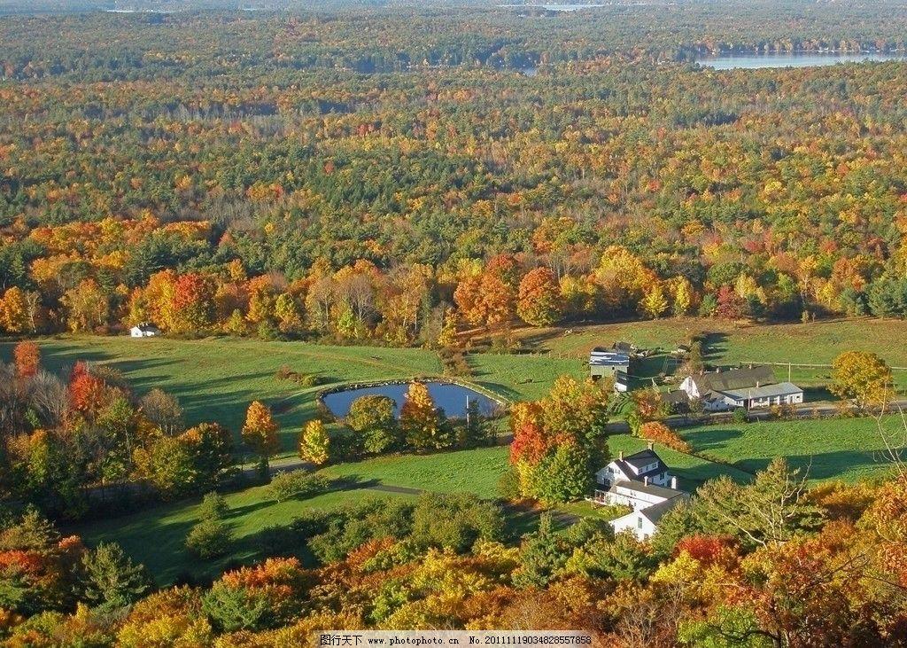 秋天森林风景 秋天森林 风景 金黄树叶 公园 美景 蓝天 树林 自然风景