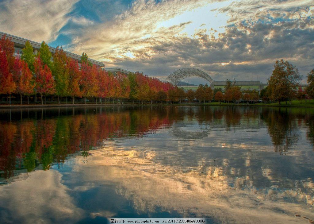 秋天野外森林风景 秋天森林 风景 金黄树叶 公园 美景 蓝天 清爽 落叶