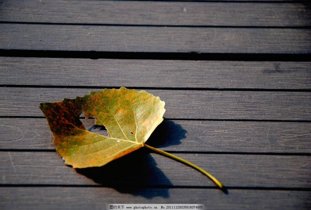 黄叶子 树叶 木板 投影 心形 摄影