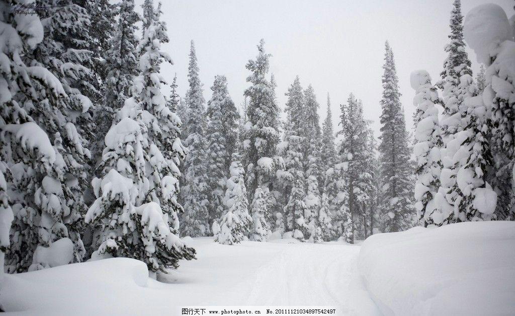 qq头像下雪的风景图片