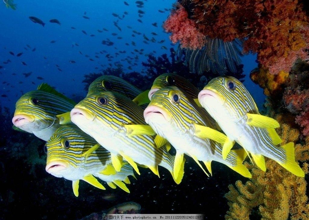 海底世界 海底 海水 鱼群 珊瑚 海洋生物 生物世界 摄影 72dpi jpg