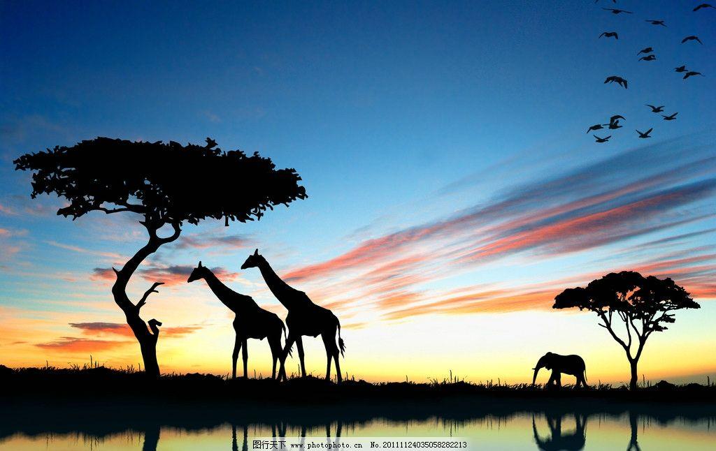 长颈鹿 非洲沼泽地 喝水 大象 动物剪影 飞鸟 和谐野生动物 动物世界