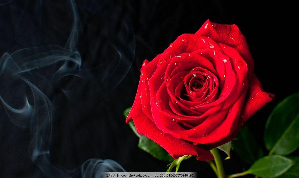 手心的蔷薇弹唱五线谱