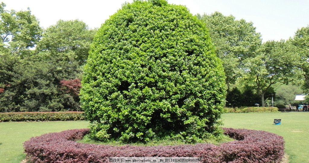 灌木 绿化苗木 苗 苗木 树 植物 1024_539