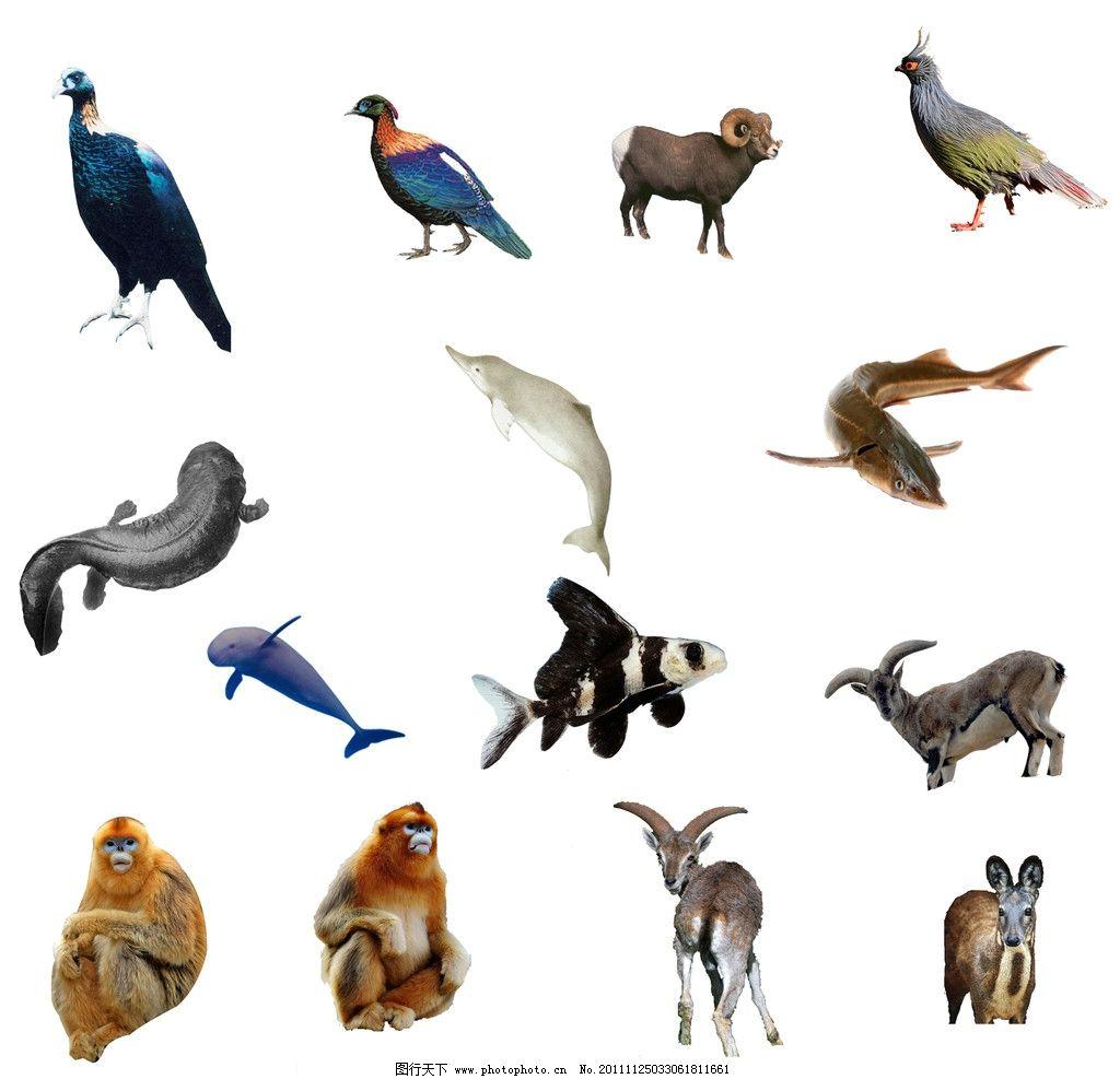动物集合图片