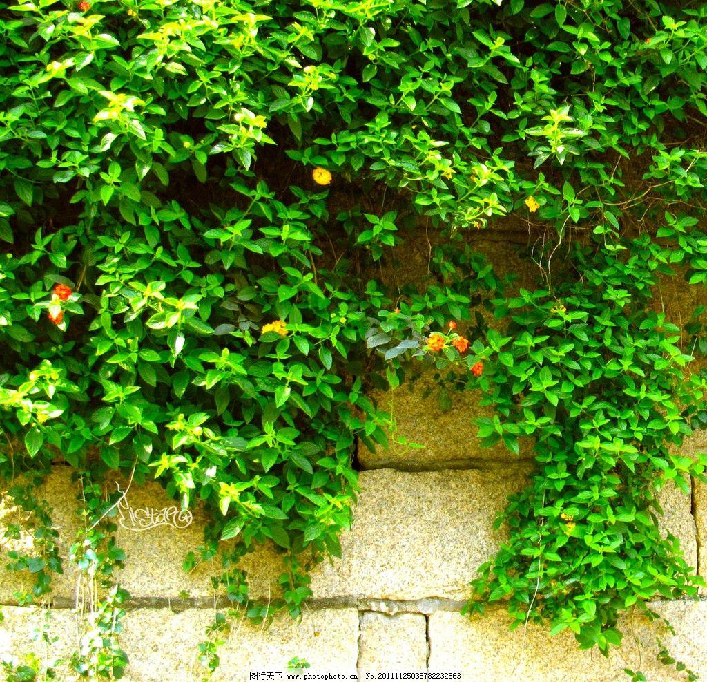 绿色花藤 树木 景观植物 墙壁 花草 生物世界 摄影 72dpi jpg