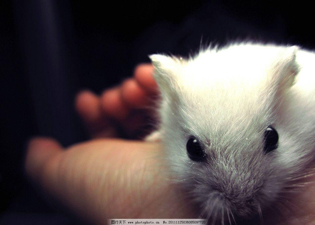 仓鼠 手 动物 其他生物 生物世界 摄影 180dpi jpg